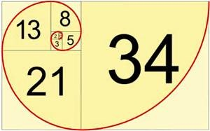 Fibonacci shell with numbers and color