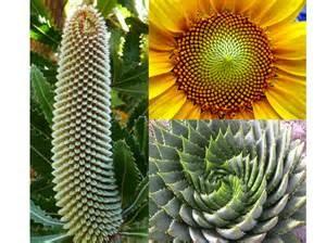 Fibonacci tri examples