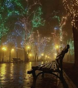 Holiday lights on wet sidewalk with bench