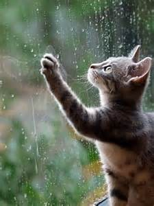 rain with cat at window