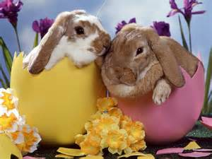 Easter romance with rabbits